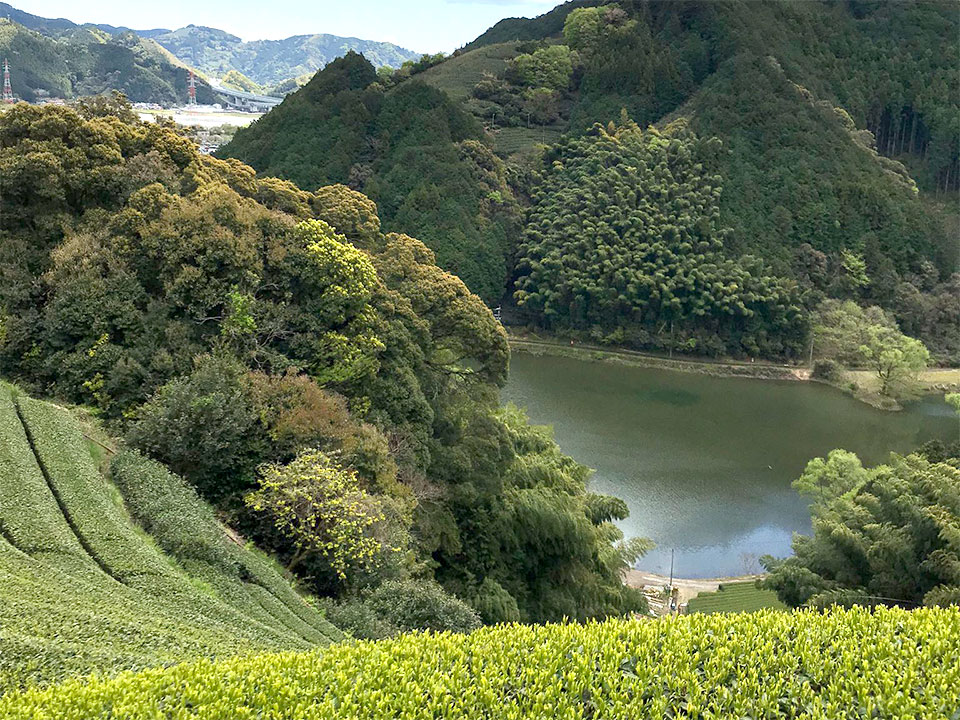 足久保に点在する、沢や水場から朝霧が上り、美味しいお茶を育む